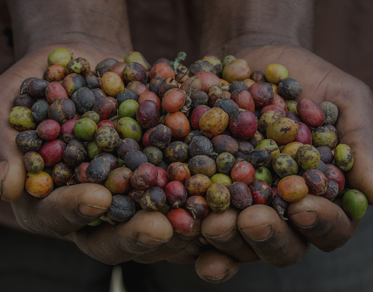 Hands holding a variety of coffee beans